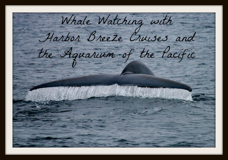 Whale Watching With Harbor Breeze Cruises Family Review