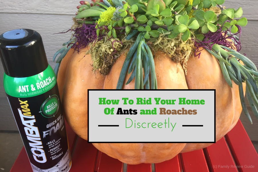 How Do I Get Rid Of Ants And Roaches Howsto Co
